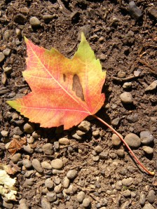I found the first leaf of fall (2009) photo: JParadisi